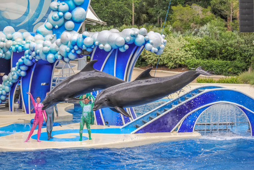 SeaWorld Entertainment Q3 Results Miss Estimates As Attendance Falls