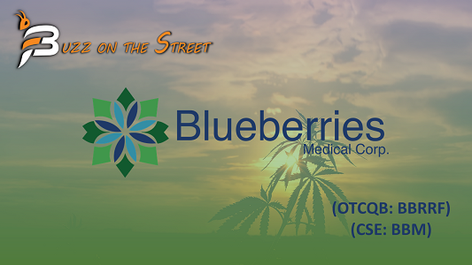 """The Latest """"Buzz on the Street"""" Show: Featuring Blueberries Medical (CSE: BBM) (OTCQB: BBRRF) News Recap"""